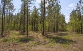 Timber 8.jpg