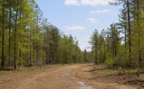 Timber 9.jpg
