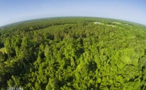 491 Trees 16
