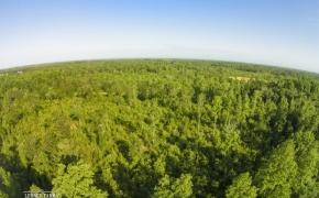 491 Trees 17