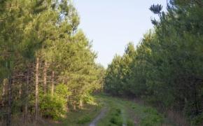 491 Trees 2