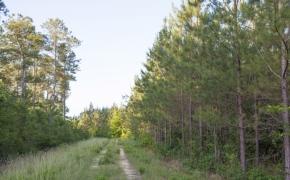 491 Trees 3