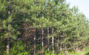 491 Trees 4
