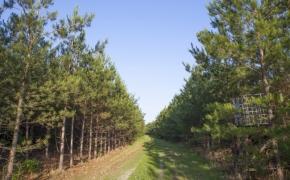 491 Trees 5