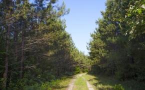 491 Trees 6