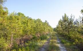 491 Trees 8