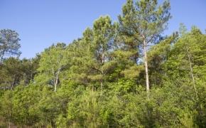 491 Trees 9