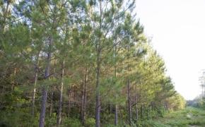 491 Trees