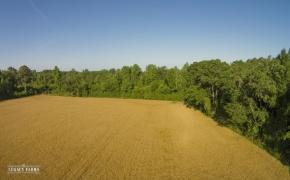 491 Wheat Fields