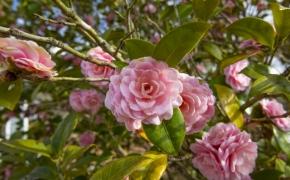 James Norris Road Flowers