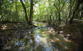 Arthur Teague Creek