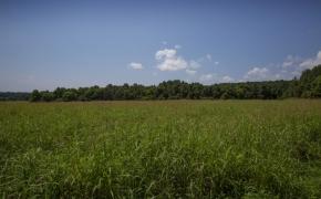 Arthur Teague Field 10