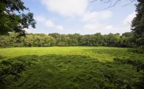 Arthur Teague Field 2