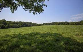 Arthur Teague Field 5