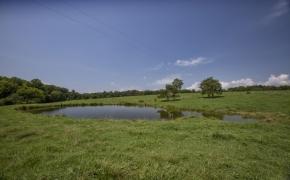 Arthur Teague Pond 2