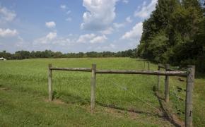 Ben Wilson Pasture