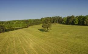 Fields 2.jpg