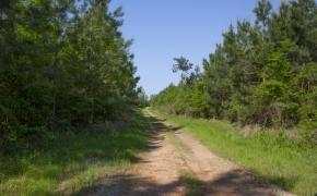 Roads 4.jpg