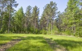 Timber 3.jpg