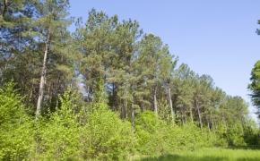 Timber 4.jpg