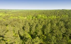 Timber 5.jpg