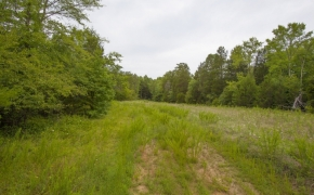 Caswell 59 Acres for Sale 3
