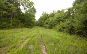 Caswell 59 Acres for Sale 6