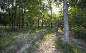Cedar-Creek-Road-29