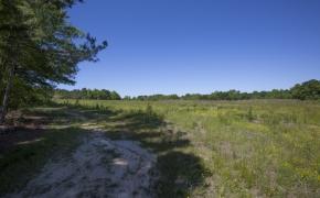 Greensboro Road Fields 11