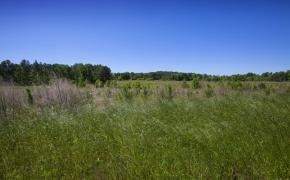 Greensboro Road Fields 15