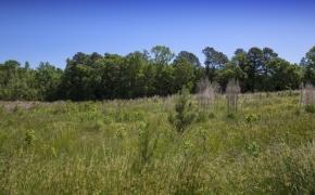 Greensboro Road Fields 19