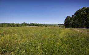 Greensboro Road Fields 9