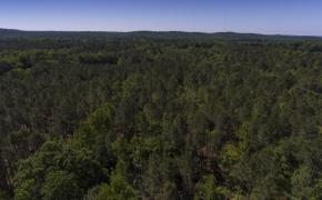 Greensboro Road Timber 1