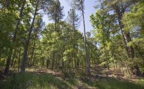Greensboro Road Timber 3