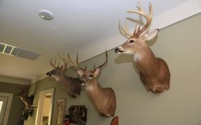 Deer-9