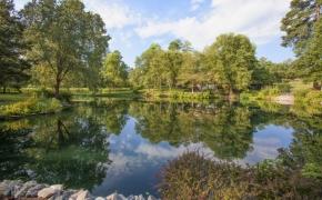 Pond View 4