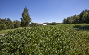 Deep River fields 4