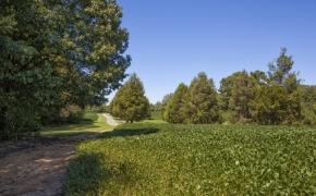 Deep River fields 6