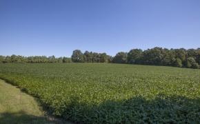 Deep River front field