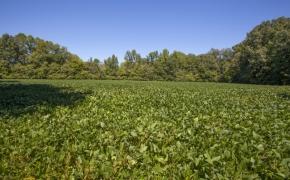 Deep River river field 2