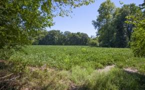 Deep River river field