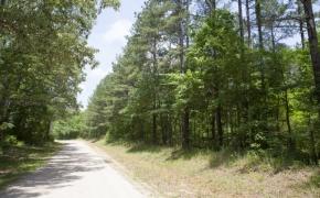 Earnest Turner Road 19