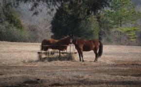 horse-pasture