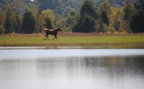 horse-pond