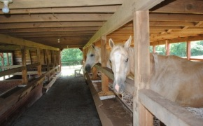 stables 4