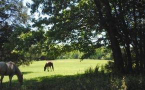 red barn horses 2