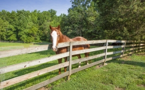 Black Horse Run Farm 12