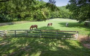 Black Horse Run Farm 14