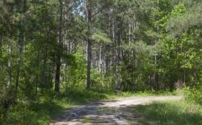 168 Acres on Grimes Road 15.jpg