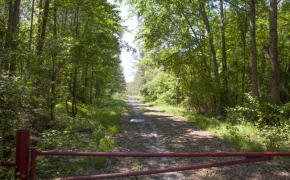 168 Acres on Grimes Road 2.jpg